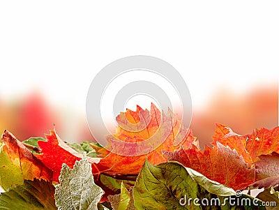 Autumn leves