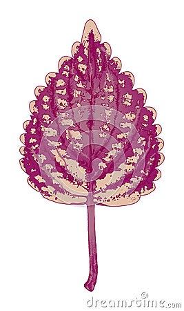 Autumn magenta leaf