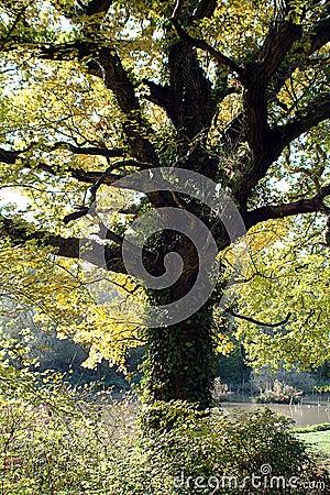Free Autumn Magic Stock Photography - 11382