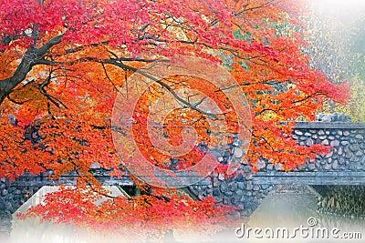 Autumn Maple and Bridge