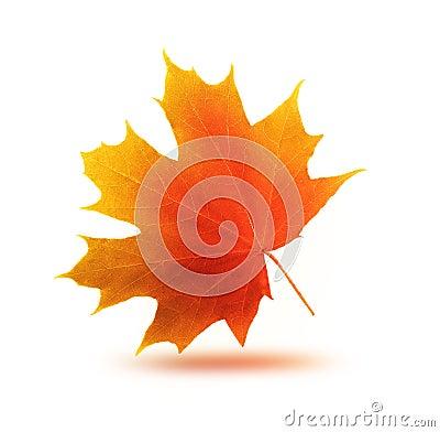 Free Autumn Maple Leaf Stock Photos - 44349653