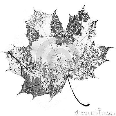 Free Autumn Maple Leaf Stock Photo - 53940900