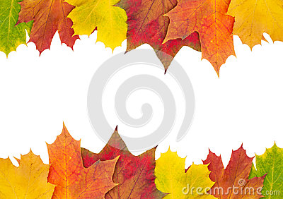 Autumn maple leaf border