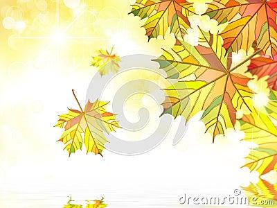 Autumn maple leafs bacground