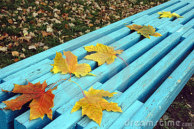Autumn maple leaves on bench