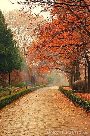 Autumn maple leaves in NanJing china