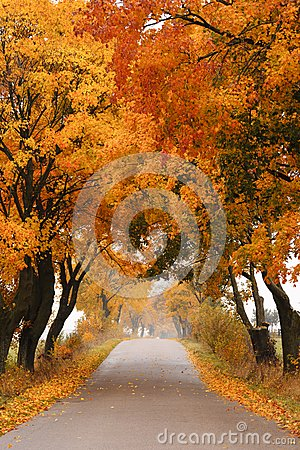 Free Autumn Maple Road. Royalty Free Stock Photography - 27369107
