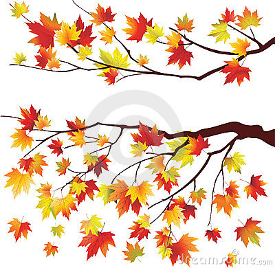 Autumn maple tree branches
