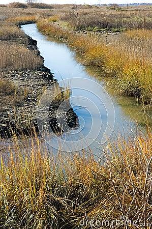 Autumn Marshland
