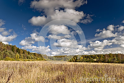 Autumn meadow and forest