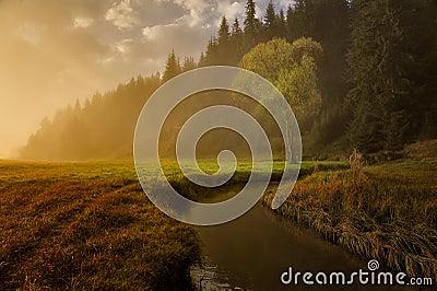 Autumn meadows