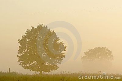 Autumn Misty Trees At Sunrise Royalty Free Stock Photography - Image: 8450637