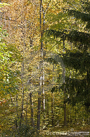 Autumn in a mixed forest
