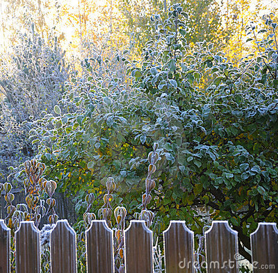 Autumn morning hoarfrost