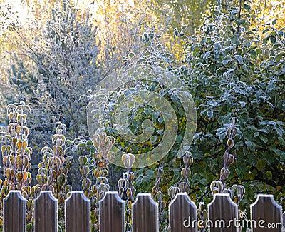 Autumn morning hoarfrost