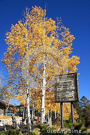Autumn on Mount Lemon