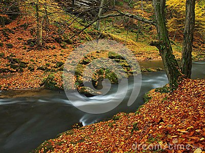 Autumn mountain river with blurred waves, fresh green mossy stones, colorful fall