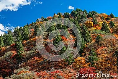 Autumn multi colored hill