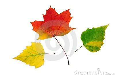 Autumn multicolor leaves