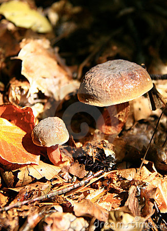 Autumn... mushrooms