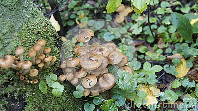 Autumn mushrooms in the forest.