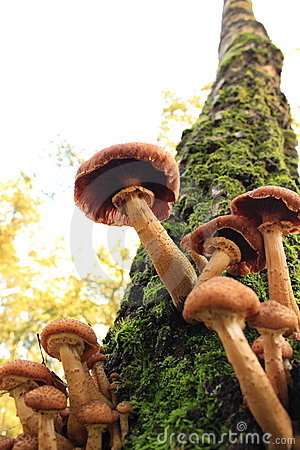 Autumn mushrooms on a tree