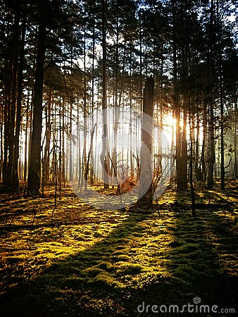 Free Autumn Mysterious Forest Royalty Free Stock Photos - 27833388