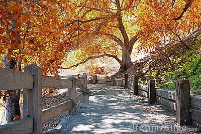 Autumn nature path