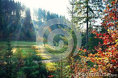 Autumn nature scene. Beautiful morning misty old forest Stock Photo