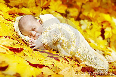 Autumn newborn baby sleeping in maple leaves.