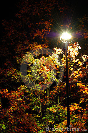 Free Autumn Night Stock Images - 3457514