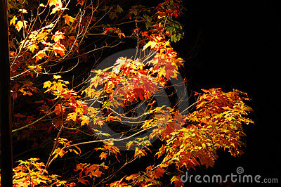 Autumn night