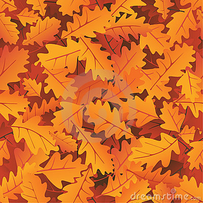 Autumn oak leaves