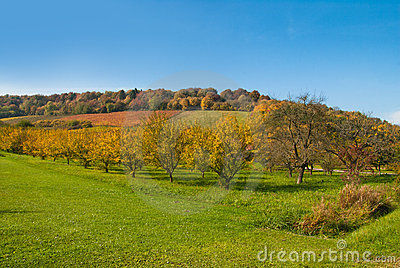 Autumn orchard, Europe