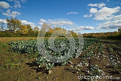 Autumn organic farm landscape