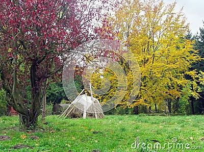 Autumn park 12