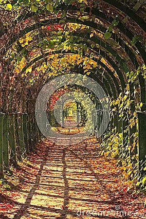 Autumn in park alley