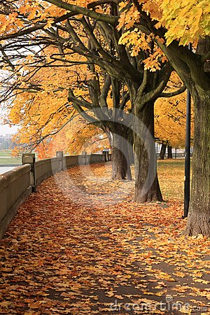 Autumn park in Krakow