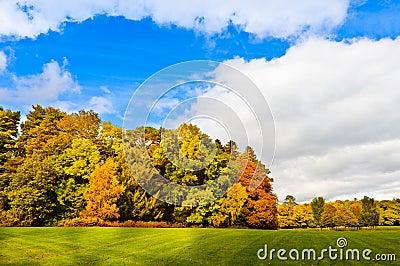 Autumn in park on sunny day, Ireland