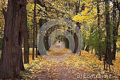 Autumn park walk 1