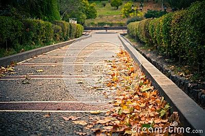 Autumn path