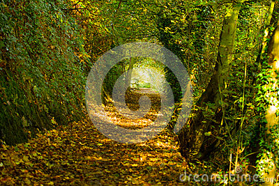Autumn path 3