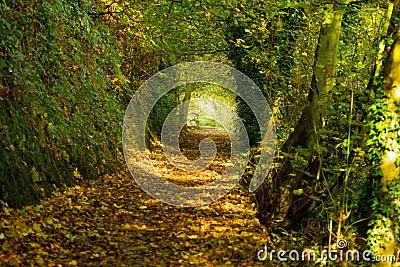 Autumn path 3