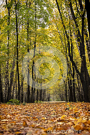 Free Autumn Path In The Wood Royalty Free Stock Images - 27122359