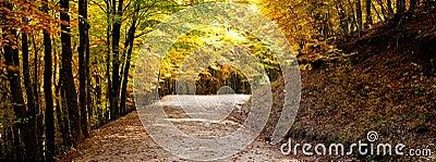 Autumn path panorama