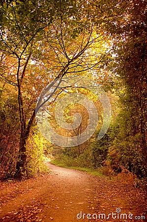 Free Autumn Pathway Stock Image - 6552151