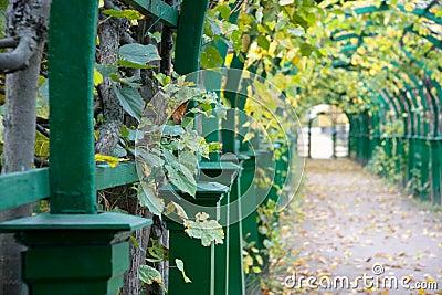 Autumn Pergola