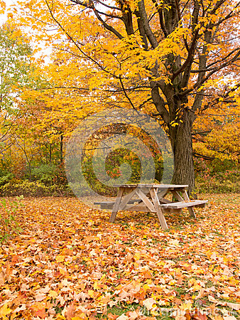 Autumn picnic table in the park