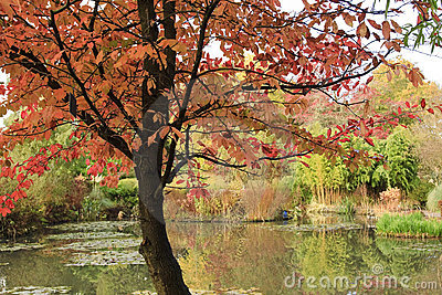 Autumn on Pond