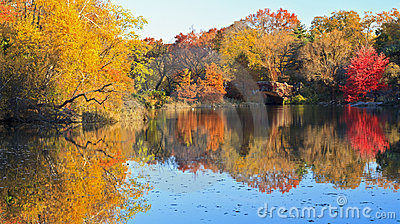 Autumn on the Pond in Central Park